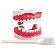 Pediatric Big Teeth & Toothbrush Set