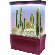 Cactus Garden LED Light Cube