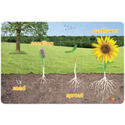 Sunflower Life Cycle Floor Puzzle (24 Pieces)