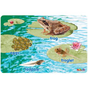 Frog Life Cycle Floor Puzzle (24 Pieces)