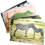 Wild Animal Poster (Set of 10)