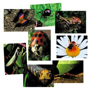 Insect Posters (Set of 8)