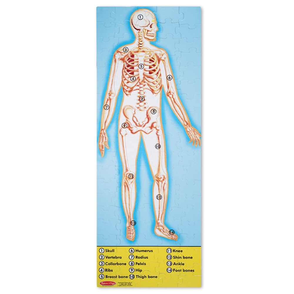 Alternate Image #1 of Human Body Anatomy 100 Piece Floor Puzzle