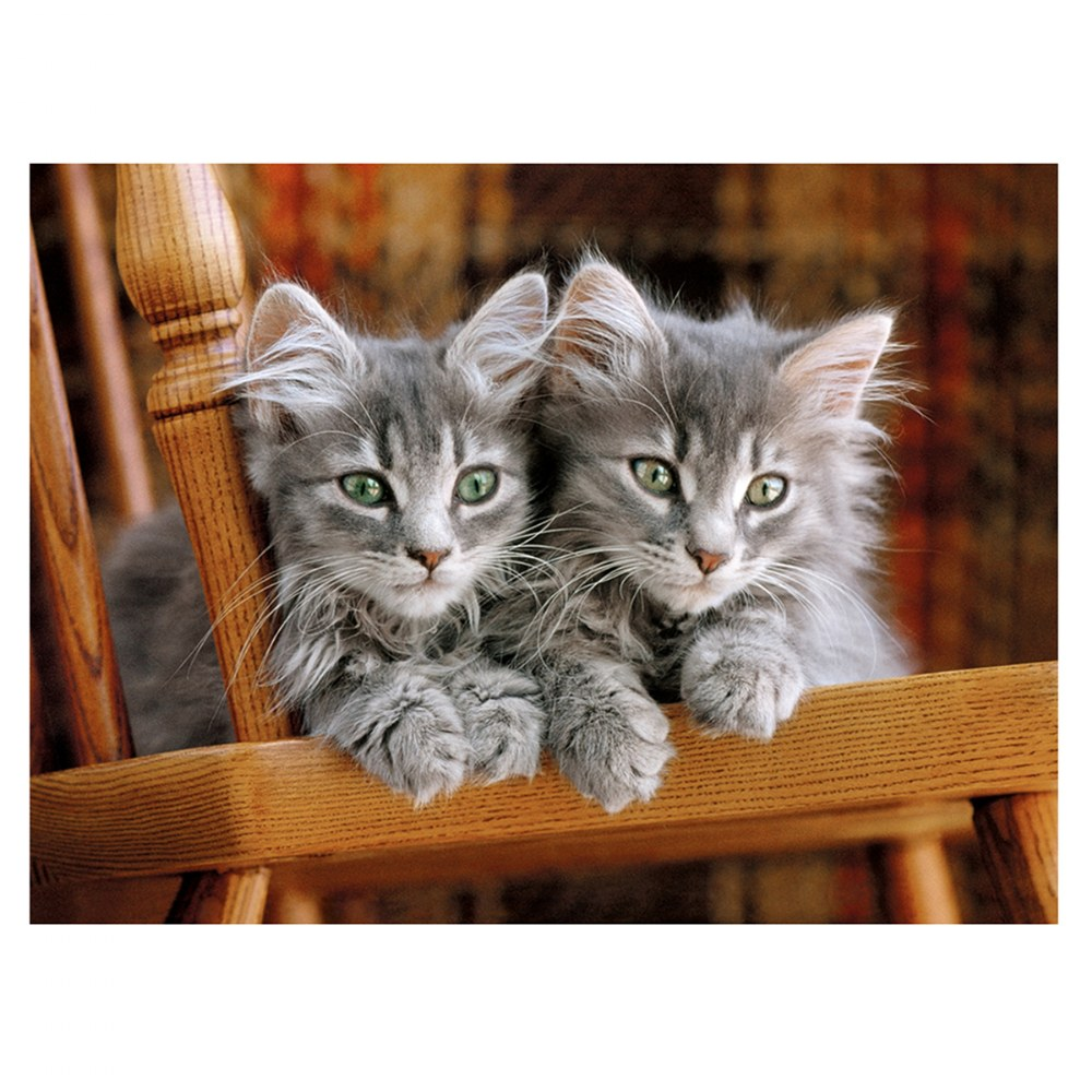 Alternate Image #1 of Gray Kittens - 500 Piece Puzzle - High Quality Collection