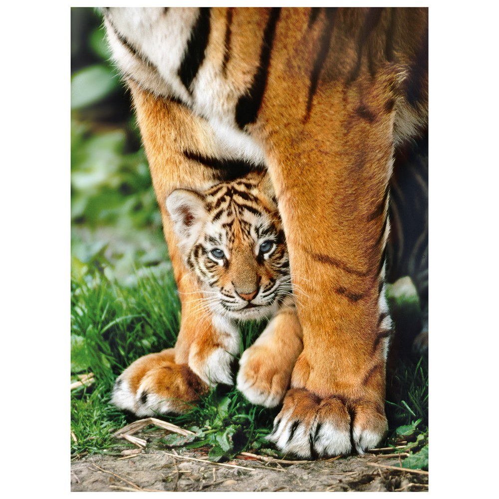 Alternate Image #1 of Bengal Tiger Cub - 500 Piece Puzzle - High Quality Collection