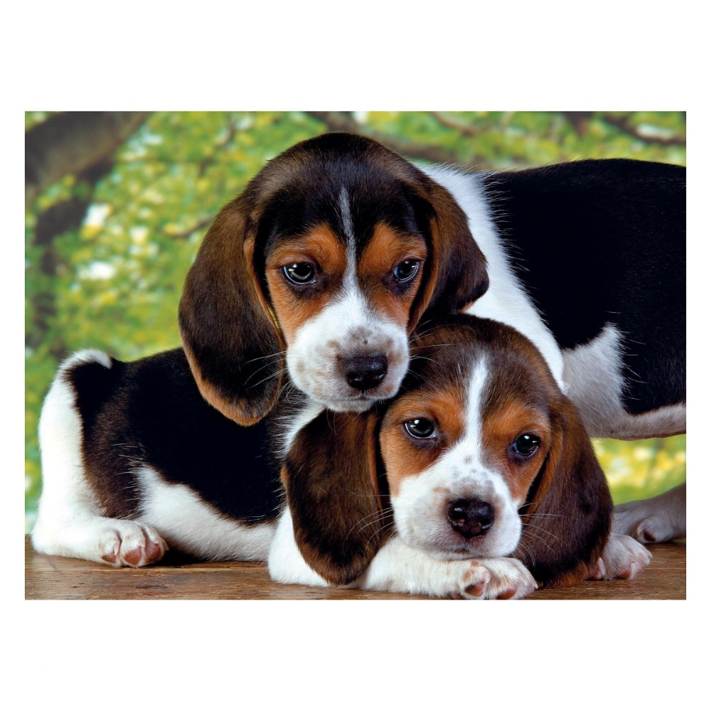 Alternate Image #1 of Gray Kittens & Beagle Puppies - Two 500 Piece High Quality Collection Puzzles