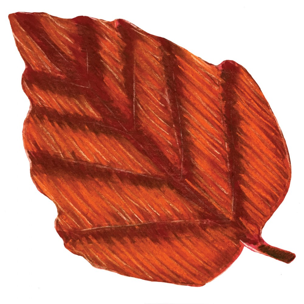 "Alternate Image #1 of Perfect Leaf Stencil Set 8"" - 12 Pieces"