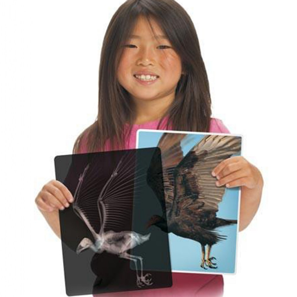 Alternate Image #3 of Real Transparent Animal X-Rays and Photo Real Matching Pictures