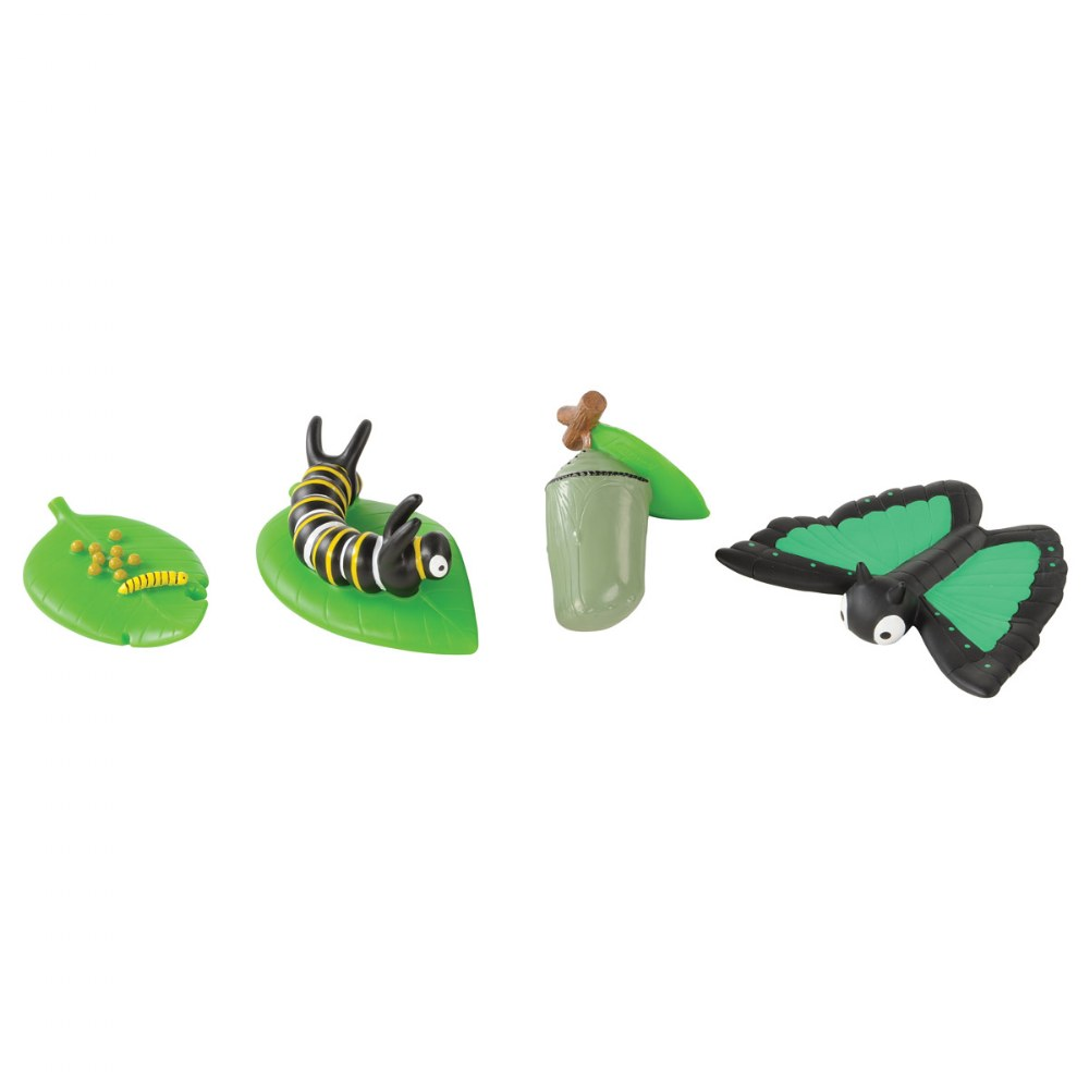 Alternate Image #2 of Toddler Sized Life Cycle Models - Chicken, Butterfly and Ladybug
