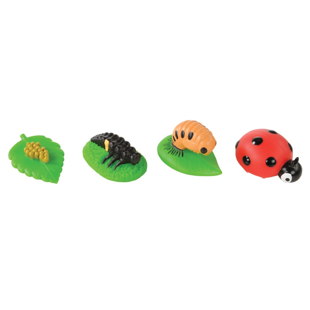 Alternate Image #3 of Toddler Sized Life Cycle Models - Chicken, Butterfly and Ladybug
