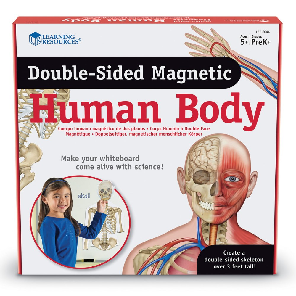 Alternate Image #4 of Double-Sided Magnetic Human Body