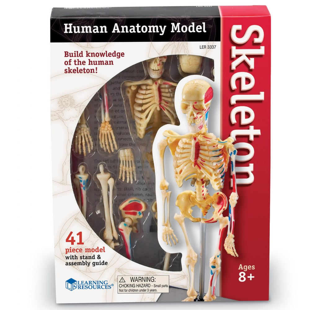 Alternate Image #2 of Skeleton Model