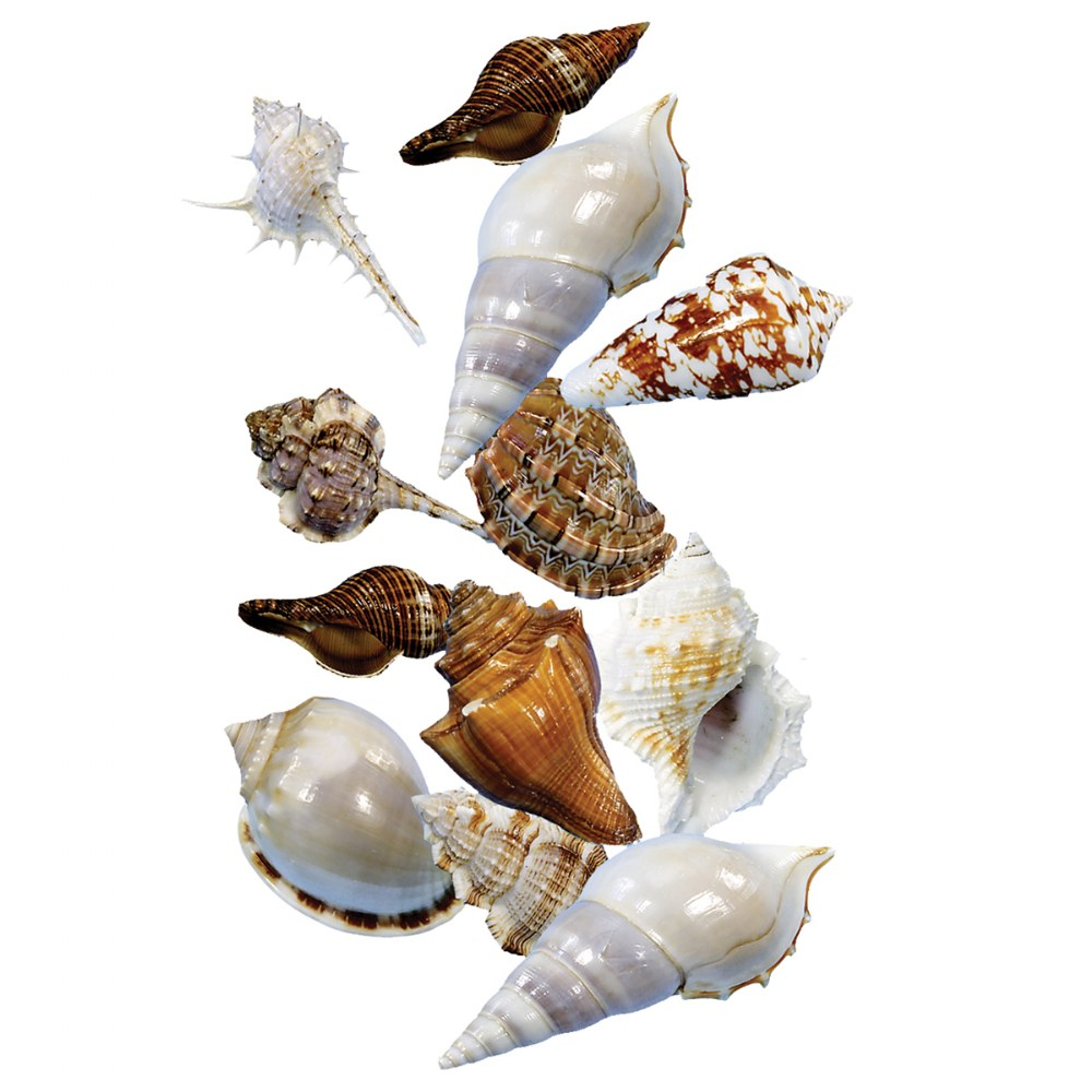 Alternate Image #1 of Sorting Shells