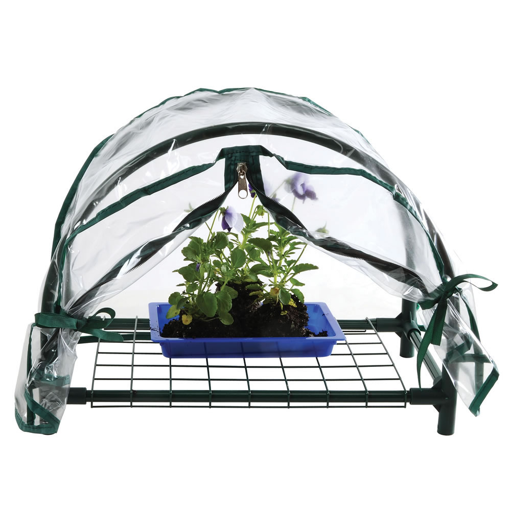 Mini Greenhouse with Cover