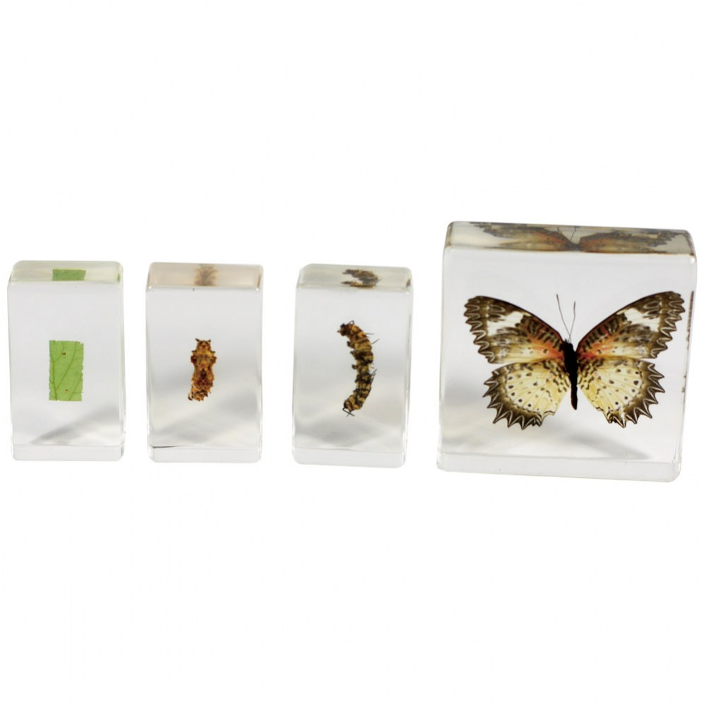 Butterfly Life Cycle Specimen Set