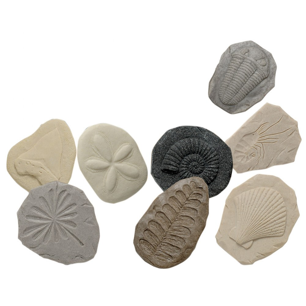 Play & Explore Fossils - Set of 8