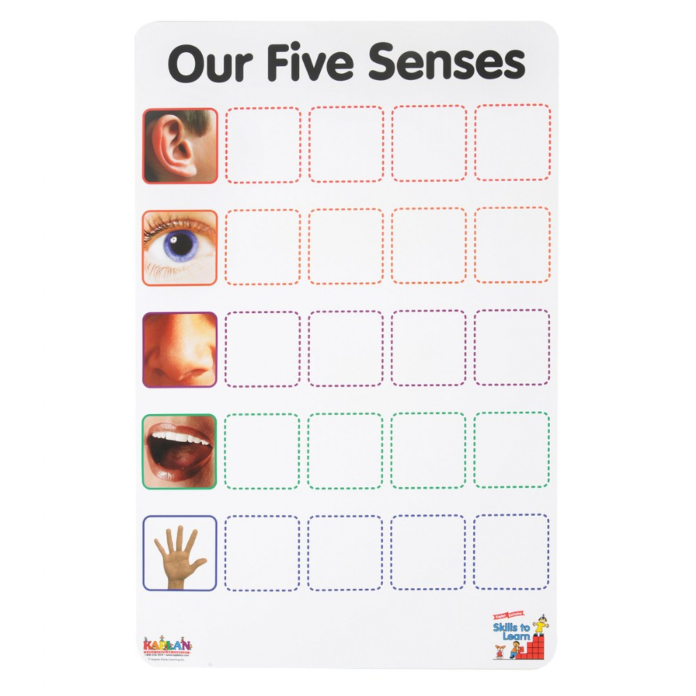 Alternate Image #1 of Our Five Senses Interactive Game
