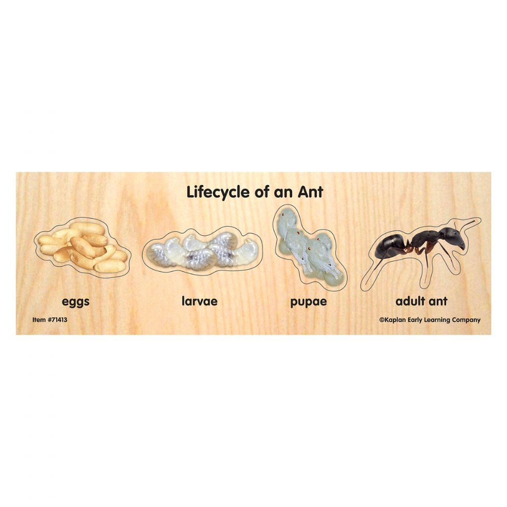 Alternate Image #1 of Life Cycle Puzzles - Set of 4