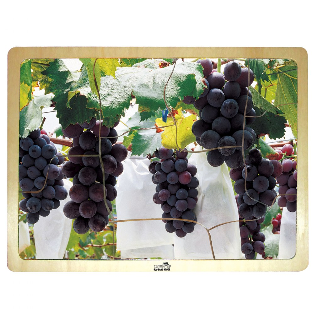 Alternate Image #1 of Fresh Fruits Puzzles - Set of 6 Puzzles - Promote Healthy Living and Healthy Eating