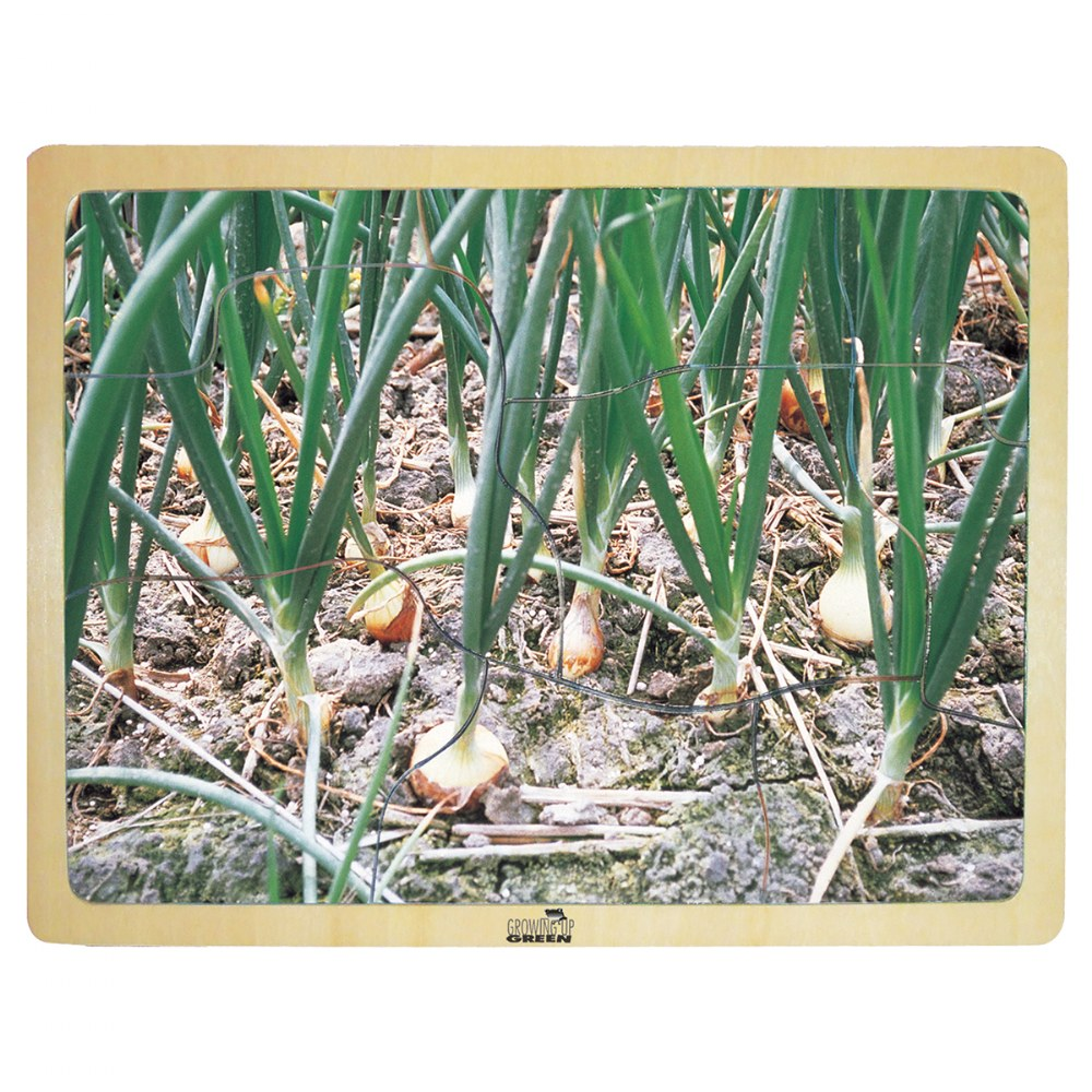 Alternate Image #5 of Fresh Vegetables Wooden Puzzles - Set of 6