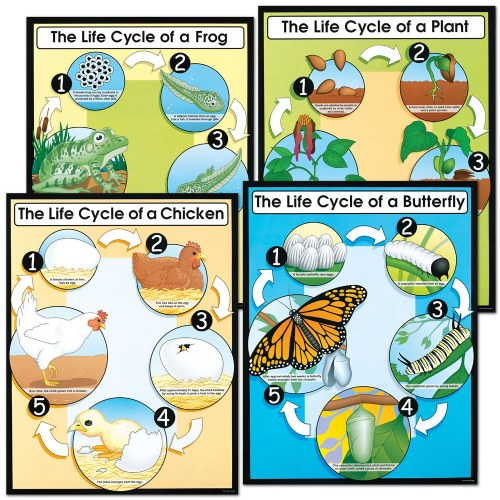 Life Cycle Posters (Set of 4)