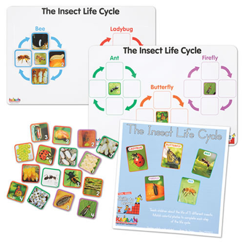Insect Life Cycle Game - Investigate Bees, Ants, Butterfly and Firefly