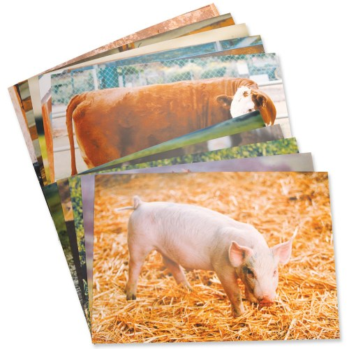 Farm Animal Posters (Set of 10)