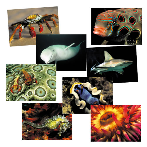 Ocean Discovery Posters (Set of 16)
