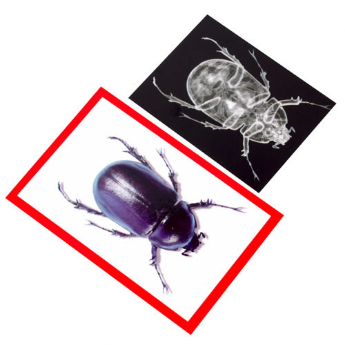 Alternate Image #1 of Insect X-Ray and Picture Cards