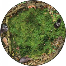 6' Photo-Fun Forest Floor Round Rug