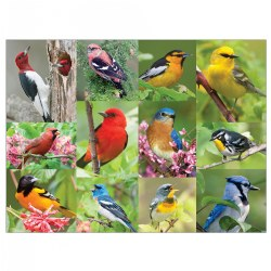 Birds of a Feather Puzzle (36 Pieces)
