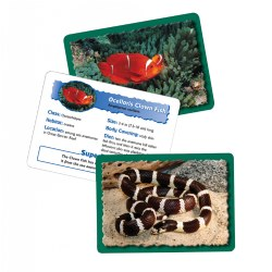 Animal Classifying Cards (Set of 4)
