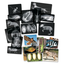Real Transparent Animal X-Rays and Photo Real Matching Pictures