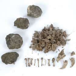 Owl Pellets - Set of 5