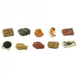 Ancient Fossils Minis - Set of 10