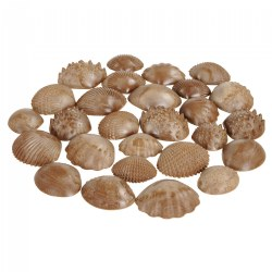 Tactile Shells - Set of 36