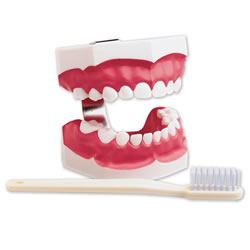 Dental Health Set