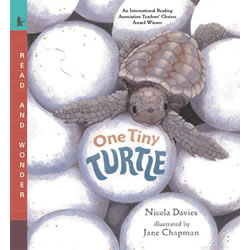 One Tiny Turtle - Paperback