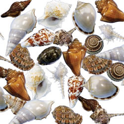 Sorting Shells Loose Parts - Set of 48