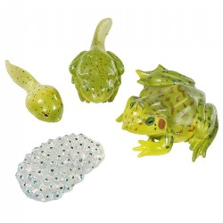 Frog Life Cycle - From Eggs to Frog