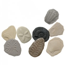 Play & Explore Fossils (Set of 8)