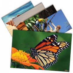 Animals and Nature Poster Set - Set of 12