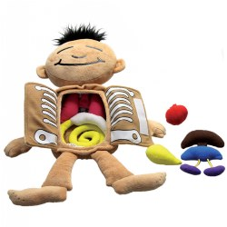 "3 years & up. Introduce children to basic organs and systems of the human body. Unbutton the chest to explore and match organs to systems. Squeeze the heart, lungs and stomach to hear different sounds. Includes an 18"" doll, 7 organs which measure approximately 3 1/2"", and a guide."