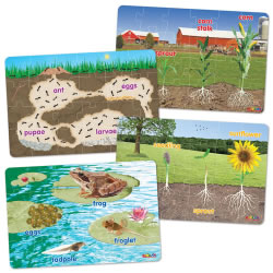 Four Lifecycle Floor Puzzles