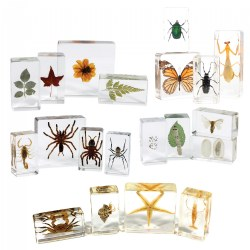 Animal & Plant Specimen Sets