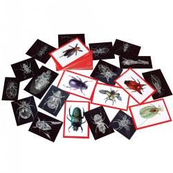Insect X-Ray and Picture Cards