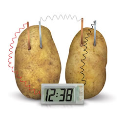7 years & up. The Potato Clock allows you to generate enough electricity to run a digital clock using two potatoes! Just push the zinc and copper electrodes into potatoes you provide causing an oxidation/reduction reaction that is converted to low voltage.