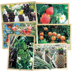 Fresh Fruits Puzzles (Set of 6)