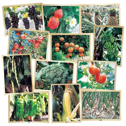 Fresh Fruit and Vegetable Puzzles - Set of 12