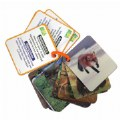 Main Image of Animal Planet 3D Creatures Flash Cards